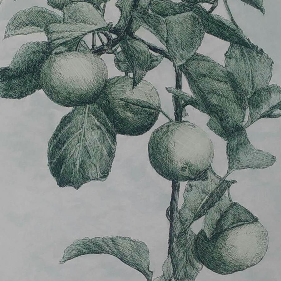 9 appels